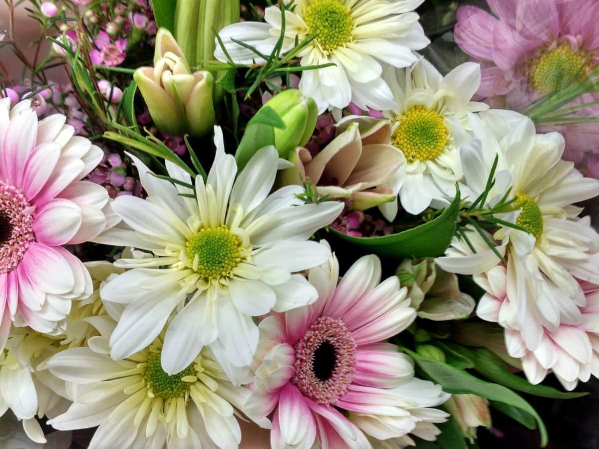 buket, cvijet, tratinčica, cvatnje, aranžman, priroda, latica, flore