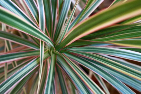 desert plant, Agave asparagaceae, nature, leaf, growth, abstract, outdoors, bright