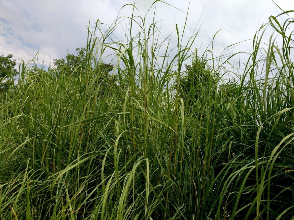 des ländlichen Raums, Landwirtschaft, Anlage, Wiese, Feld, Sommer, Gras, Spring