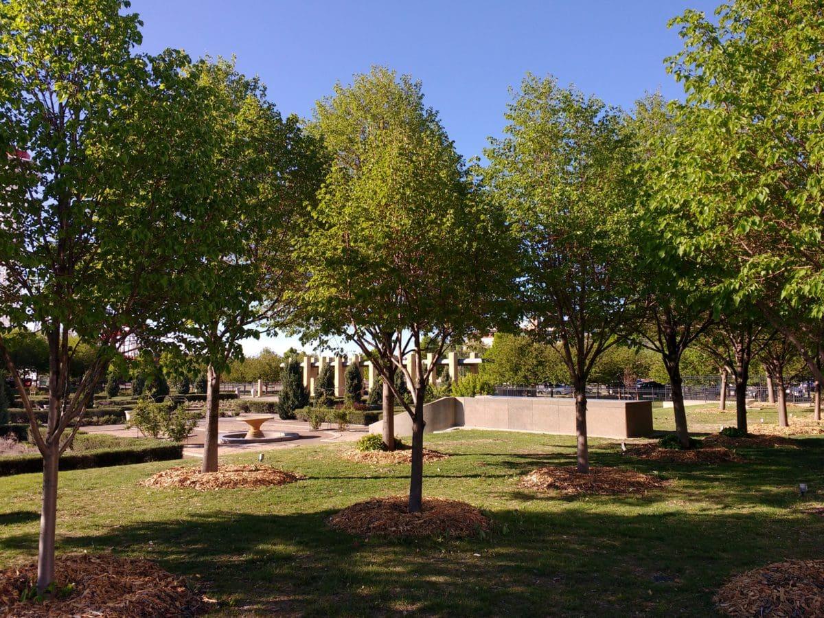 cây, cảnh quan, công viên, cỏ, lá, Sân vườn, ngoài trời, Thiên nhiên