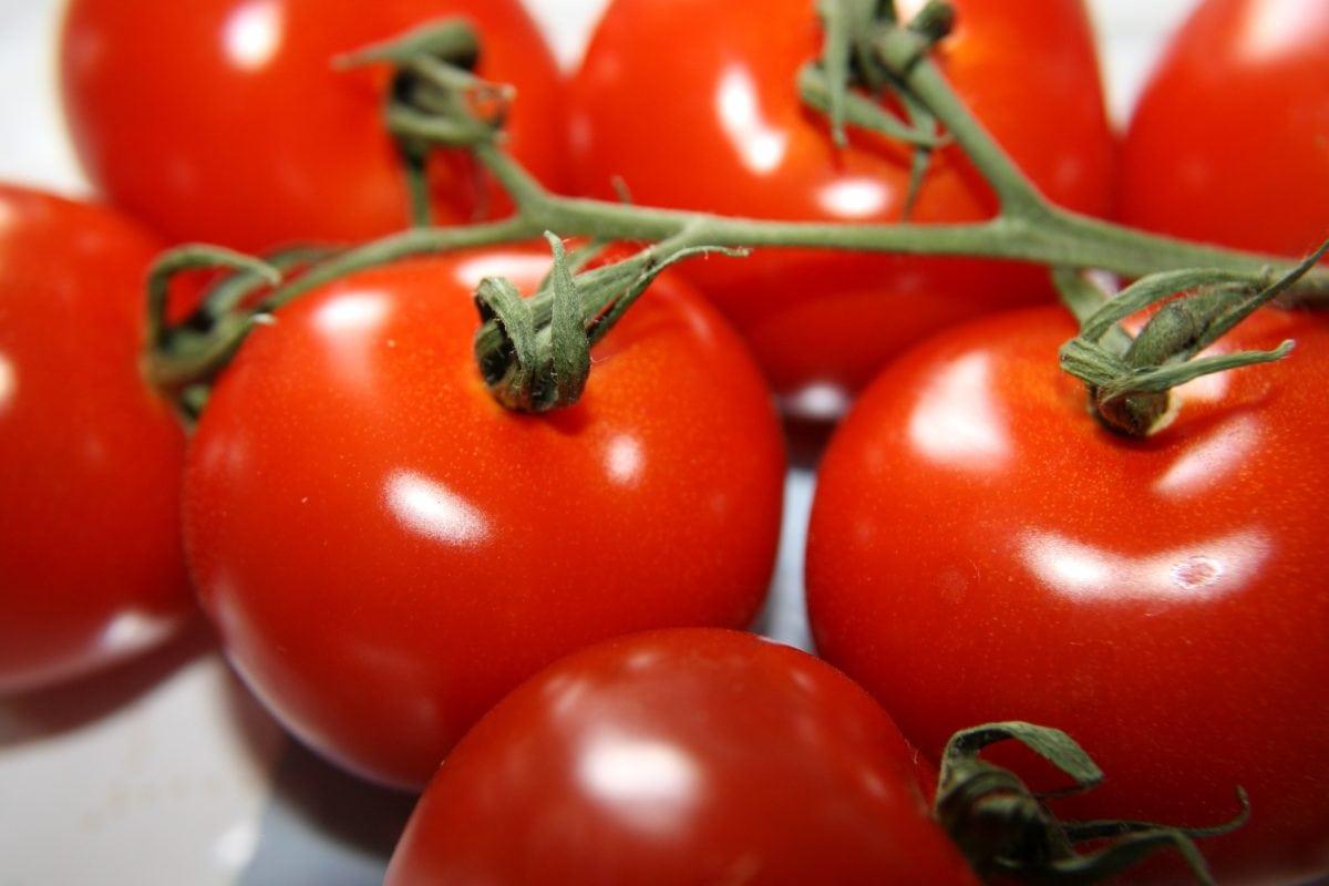 ντομάτες, ντομάτα, υγιεινή, μεγαλώνουν, τροφίμων, βότανο, χορτοφάγος, λαχανικό