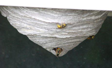 말 벌, 곤충, 자연, 무척추동물, 야외에서, 야생 동물, 나무, 동물