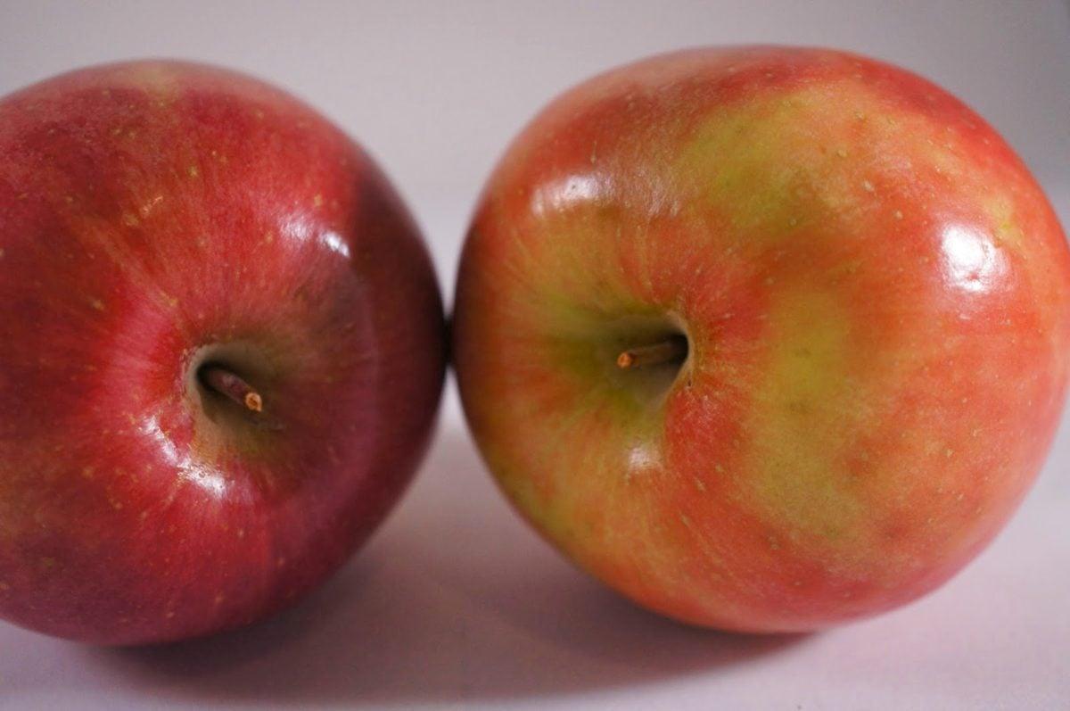 fruits, Agriculture, antioxydant, pomme, pommes, calories, Couleur, délicieux