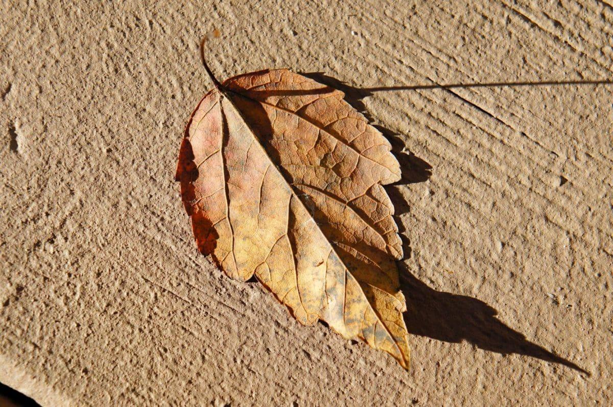 στεγνό σεζόν, υφή, παλιά, φύση, μοτίβο, ξηρά, ξύλο, χρώμα