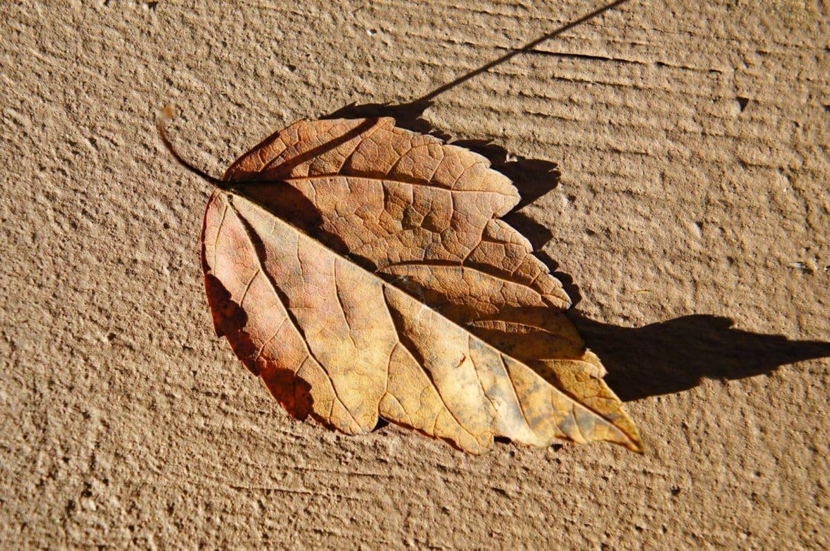 tør, tørre sæson, tekstur, møl, mønster, abstrakt, natur, farve