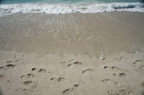 плаж, море, вода, океан, морския бряг, пясък, Шор, сърфинг