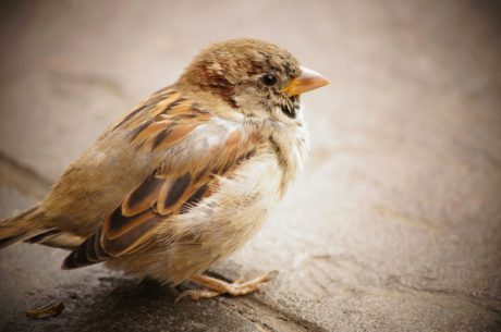 sparrow, animal, vertebrate, wild, feather, beak, bird, wildlife