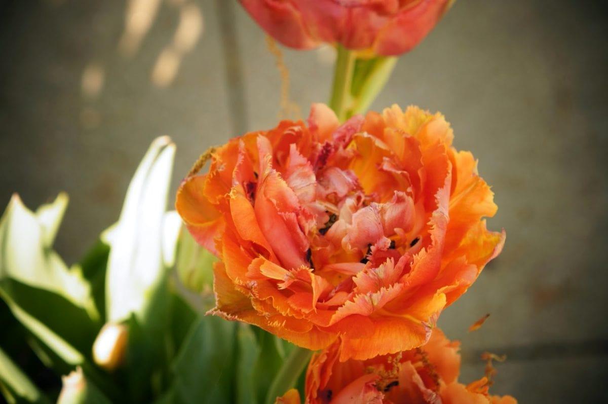 vrt, buket, biljka, cvijet, priroda, cvijet, cvatanje, ruža