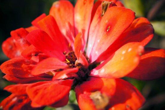 organism, petal, nature, garden, blossom, flower, herb, plant
