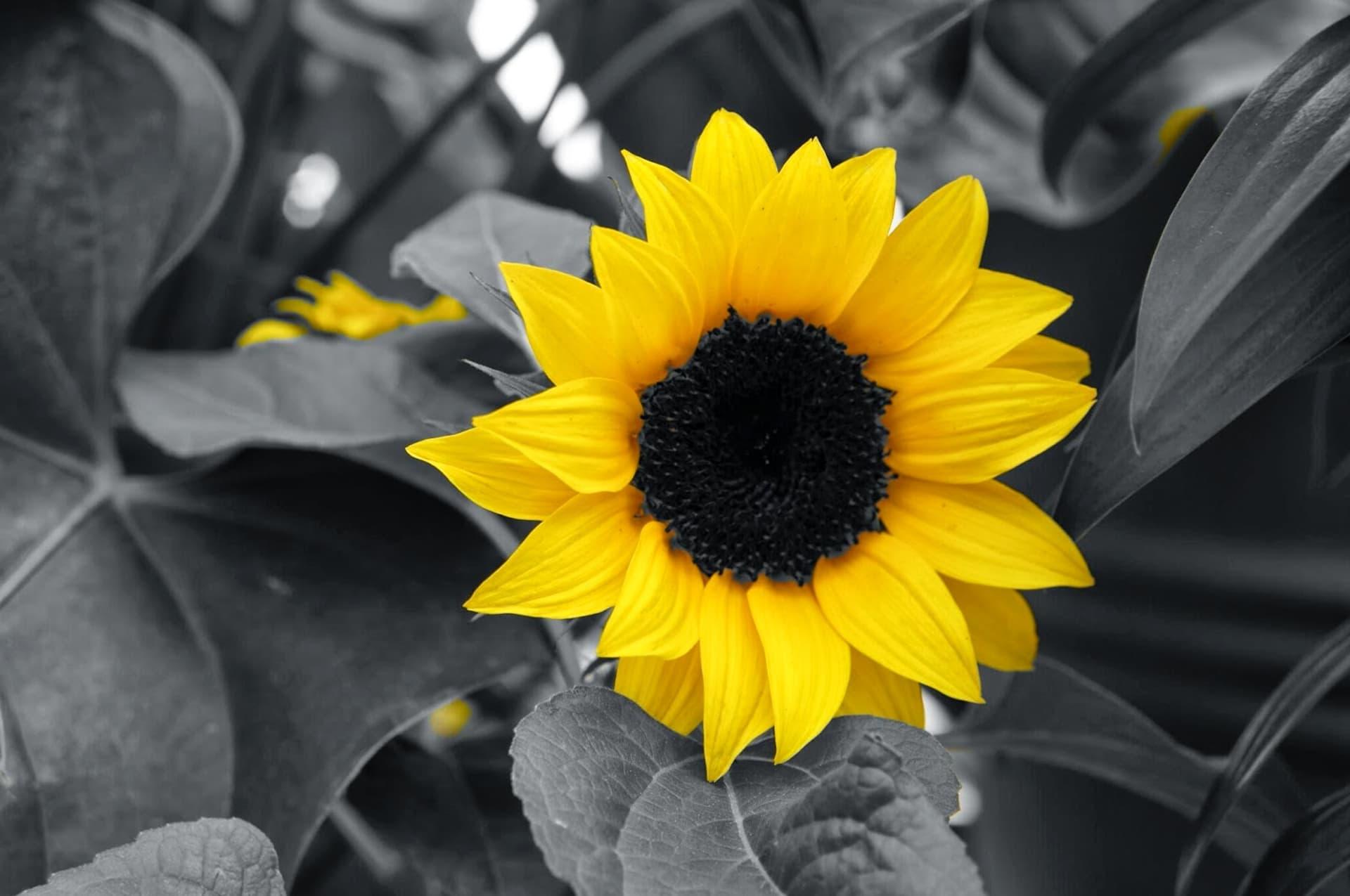 Free Picture Black And White Illumination Monochrome