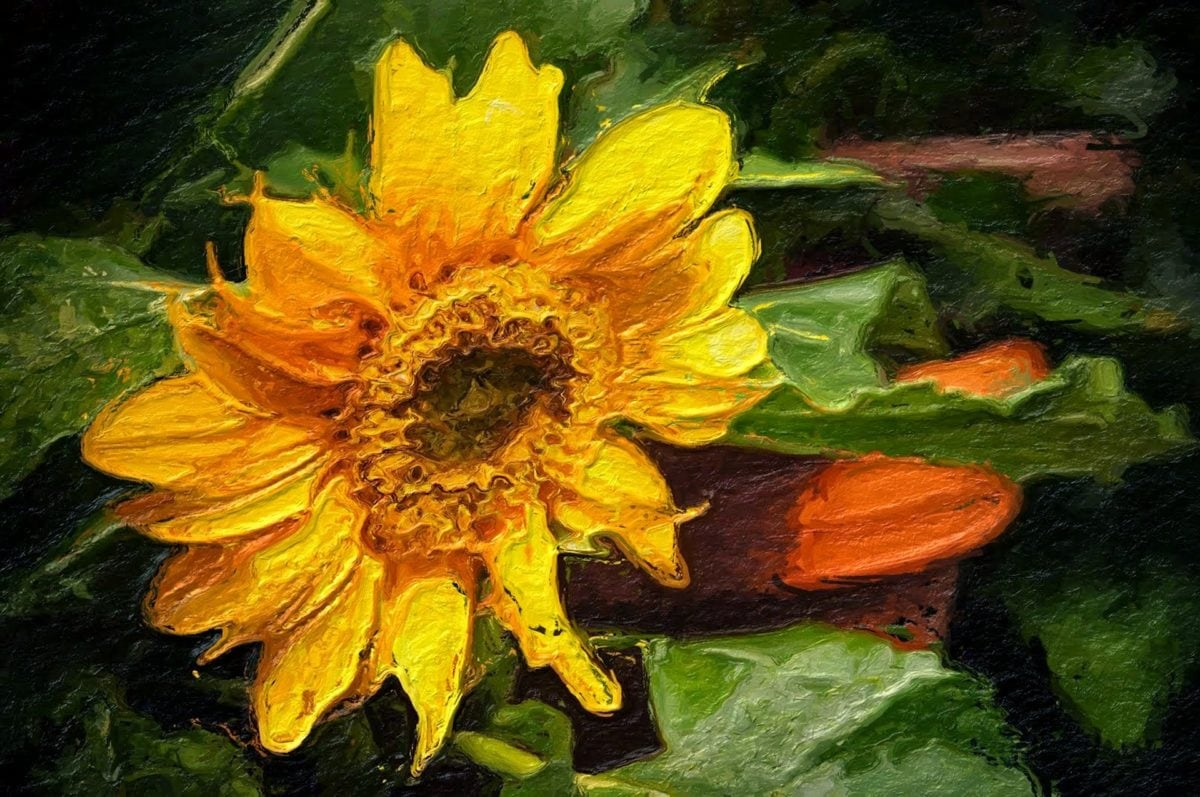 Schone Kunsten, verlichting, fotomontage, plant, veld, kruid, natuur, geel