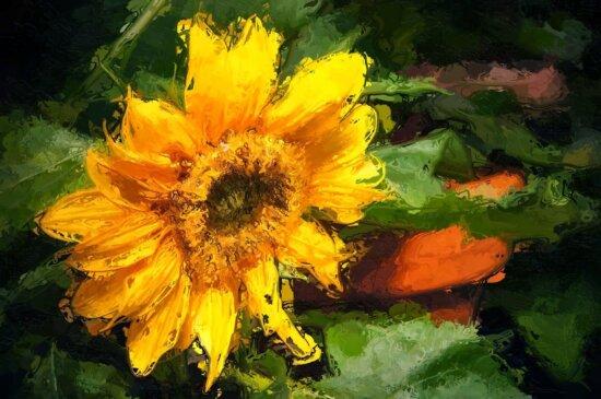 Bildende Kunst, Landwirtschaft, Sommer, Anlage, Sonnenblume, Feld, Kraut, Blume