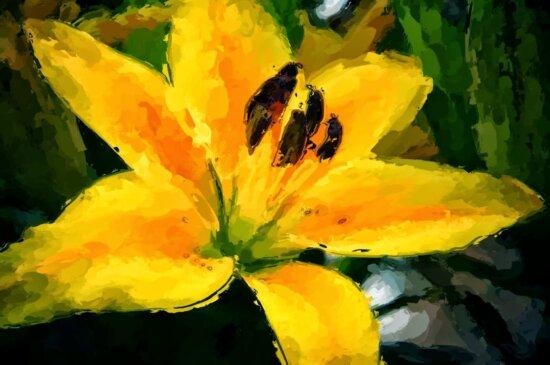 Bildende Kunst, Lilie, gelb, Blume, Anlage, Blatt, Natur, im freien
