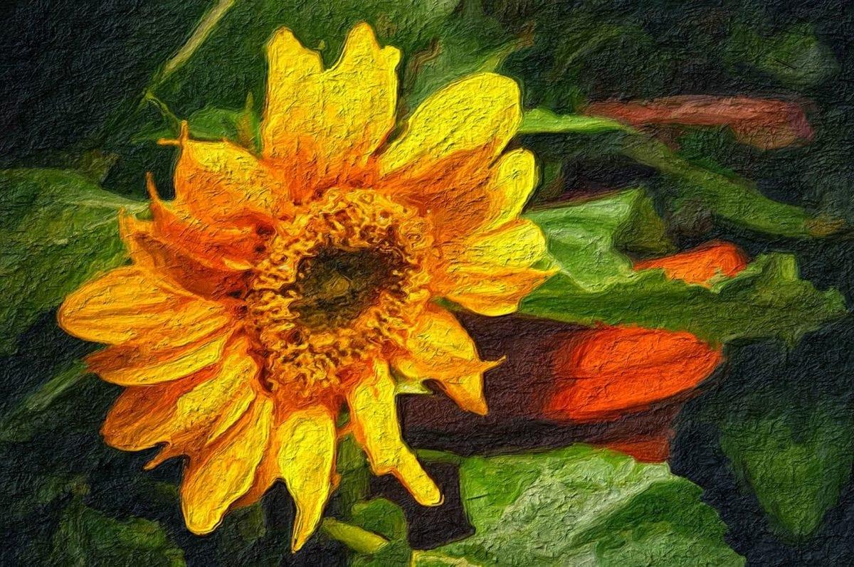 kuvataiteen, öljymaalaus, kukka, auringonkukka, keltainen, kesällä, kenttä, terälehti