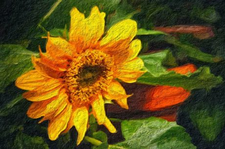 fine arts, oil painting, flower, sunflower, yellow, summer, field, petal
