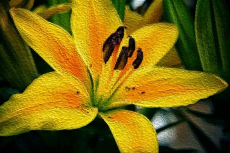 fine arts, lily, oil painting, herb, nature, flora, color, bright