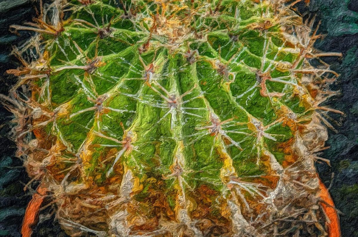 fine arts, fotomontage, natur, kødædende plante, skarpe, saftige, flora, kaktus