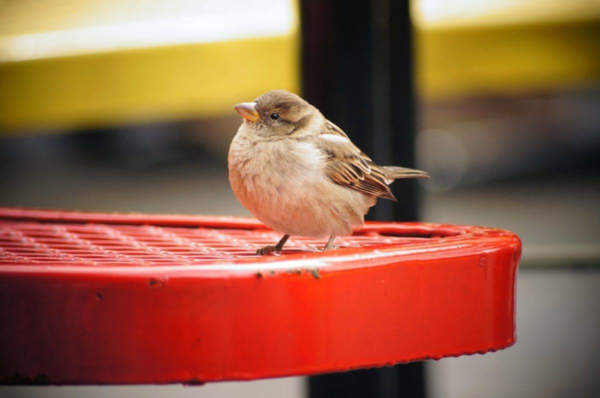 등뼈 동물, 부리, 참새, 날개, 야생, 깃털, 야생 동물, 새