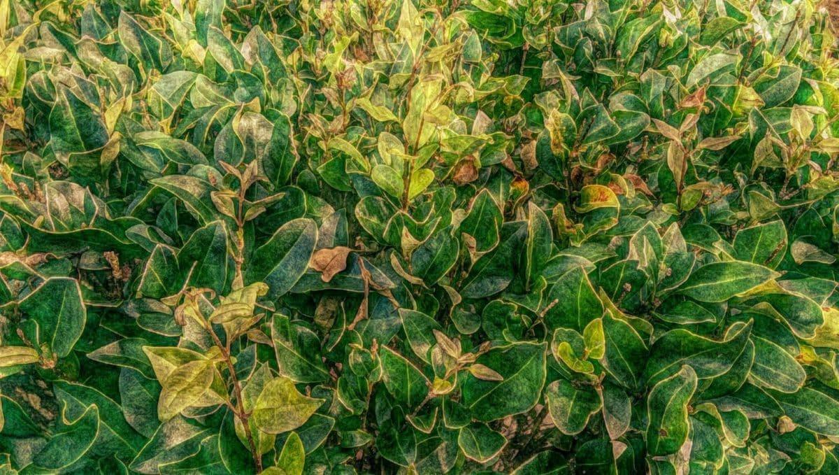 fine arts, natur, plante, busk, blad, flora, mad, vækst