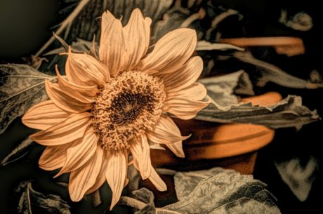 fine arts, oil painting, flower, yellow, garden, petal, plant, sunflower
