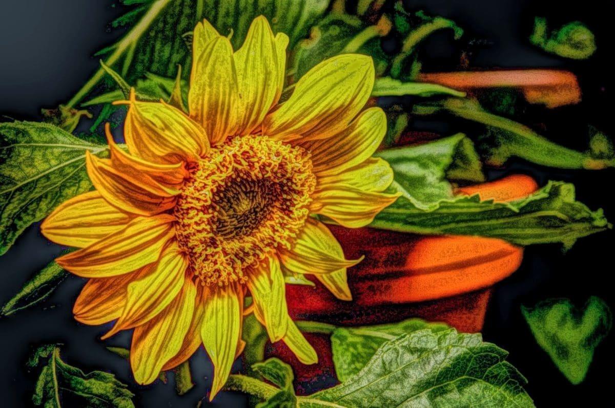 výtvarné umění, ilustrace, olejomalba, závod, zemědělství, léto, květ, pole