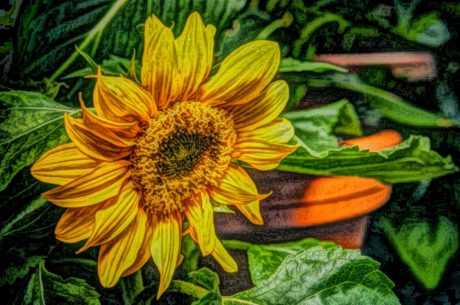 fine arts, oil painting, photomontage, summer, sunflower, plant, yellow, nature