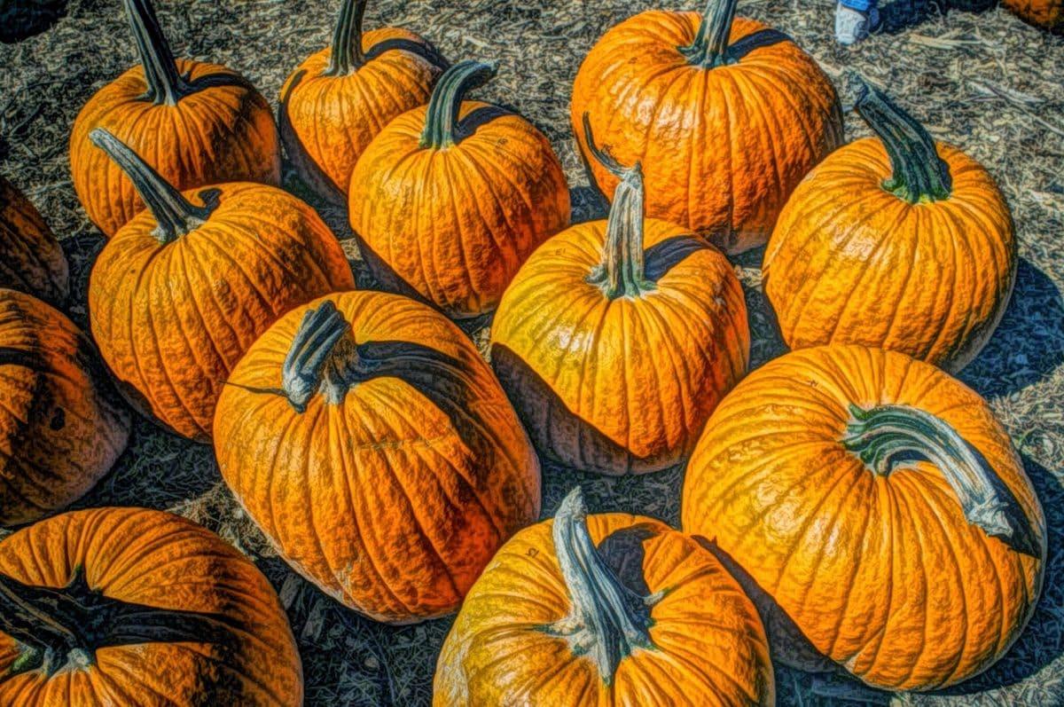 výtvarné umění, olejomalba, zelenina, podzim, dýně, produkují, jídlo, Barva