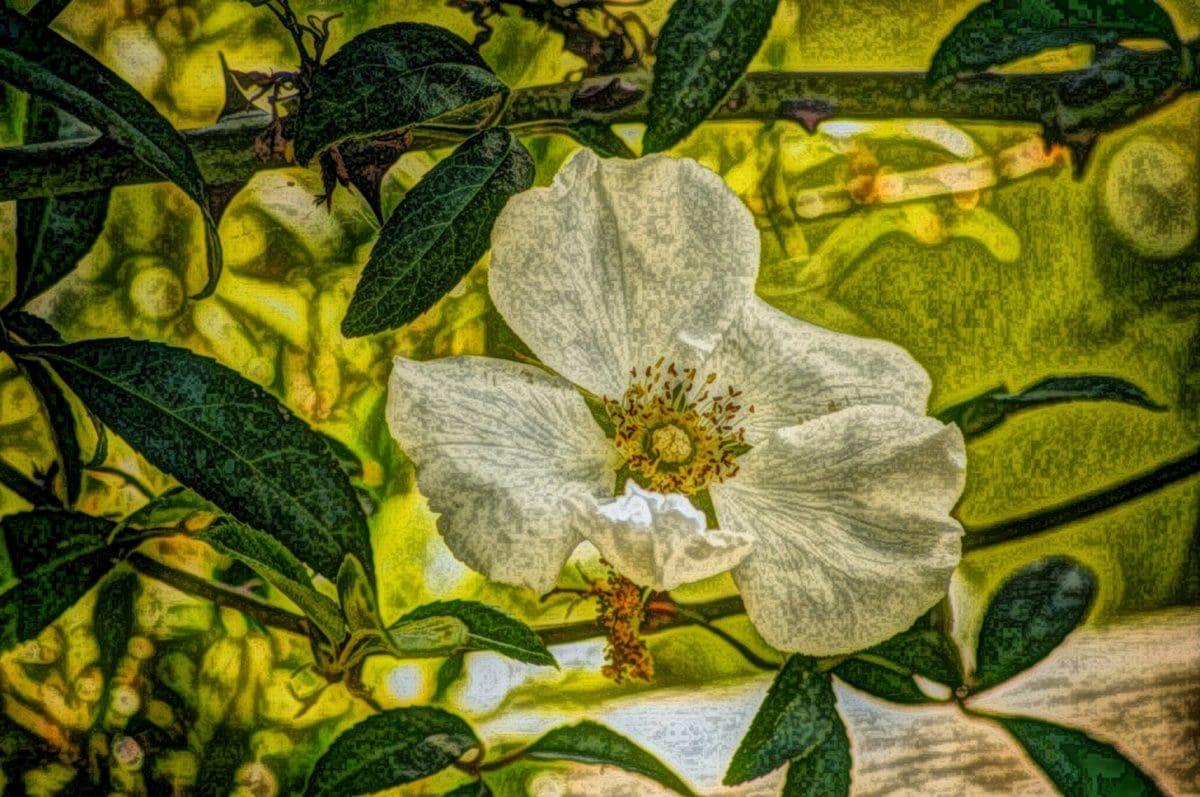 oliemaleri, fotomontage, blad, træ, natur, flora, blomst, haven