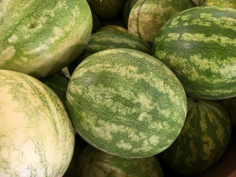 watermelon, produce, melon, vegetable, food, grow, nature, flora