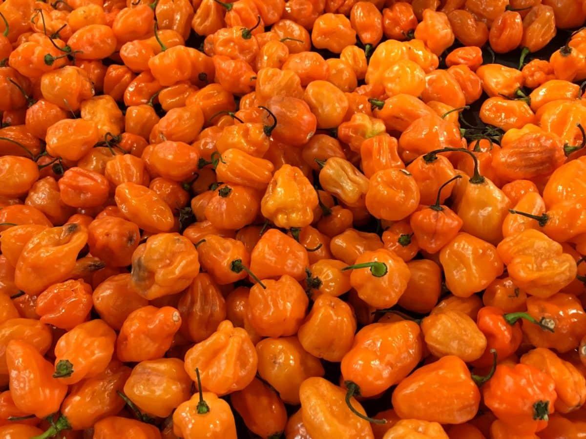 paprika, paprike, hrana, zdrav, povrća, prehrana, kuhanje, zdravlje