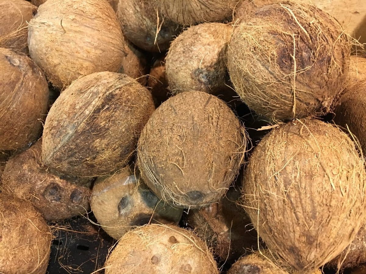 kookos, palmu, Ruoka, hedelmät, siemenet, ravitsemus, Luonto, juuri
