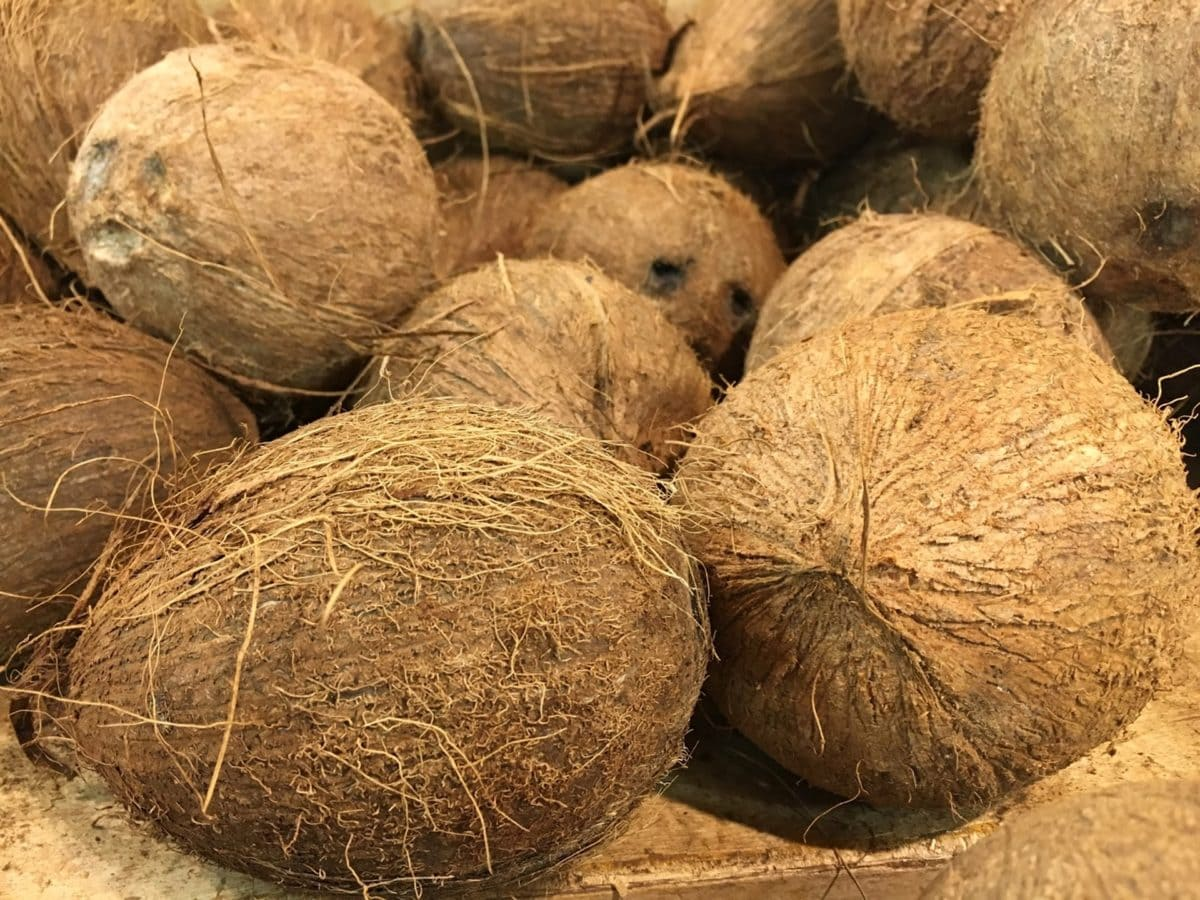 coconut, food, fruit, seed, nature, shell, straw, nutrition