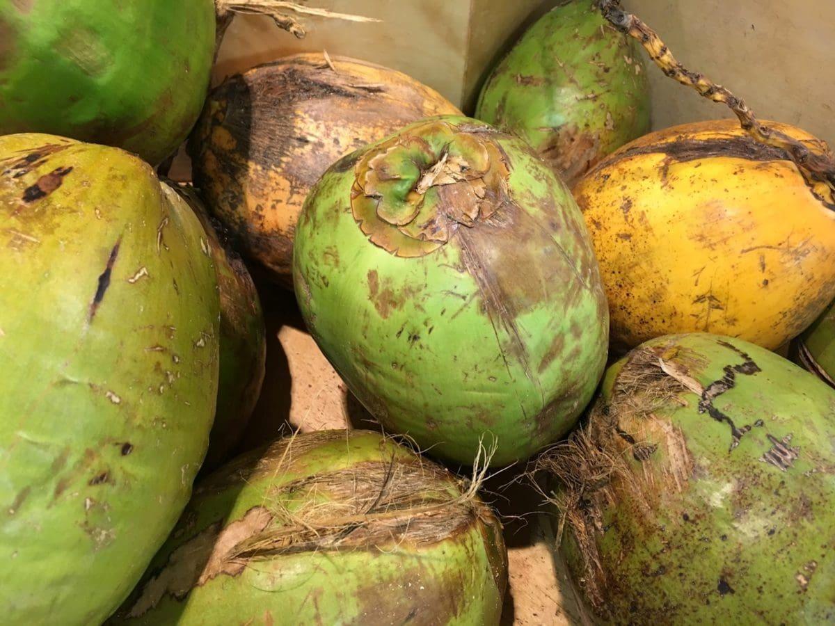 coconut, farming, grow, market, exotic, fruit, healthy, tropical