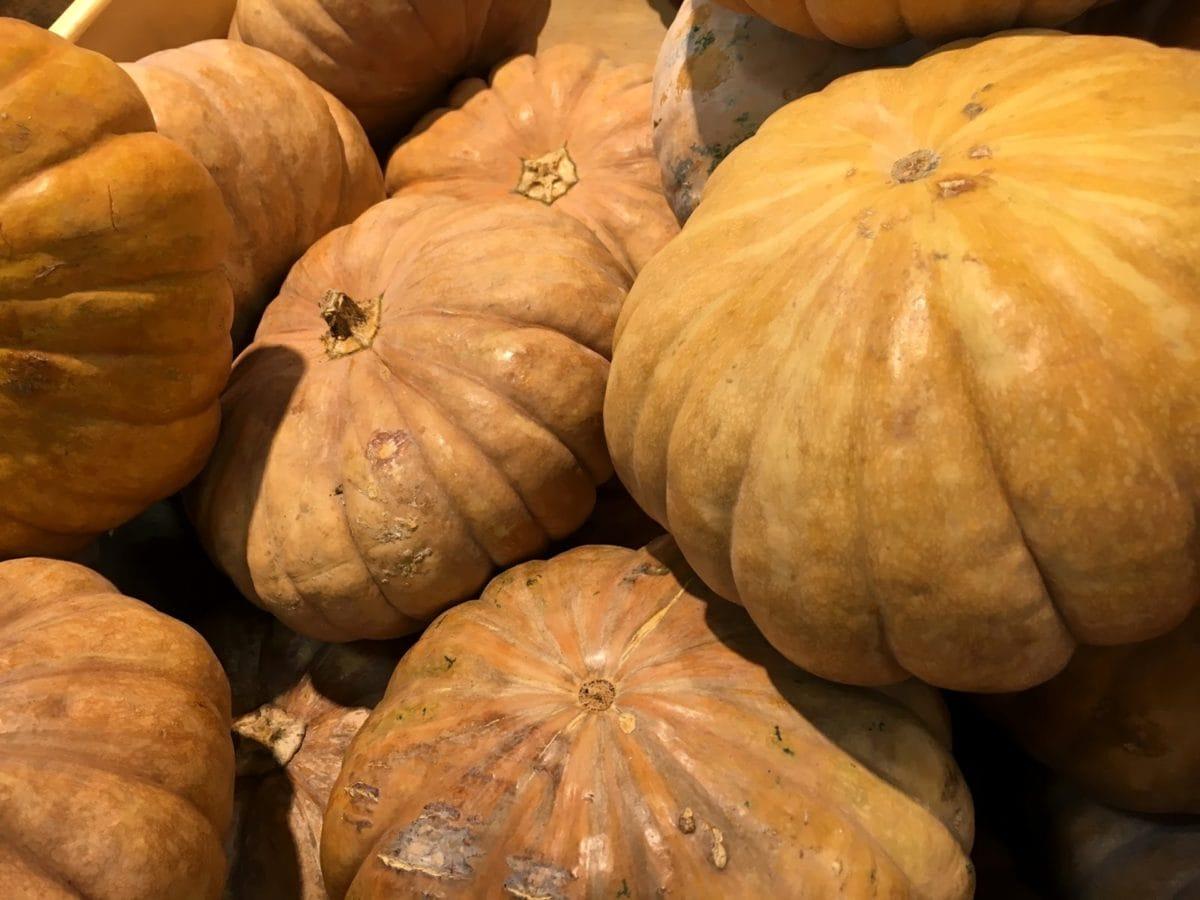 squash, harvest, pumpkin, thanksgiving, autumn, Halloween, food, market