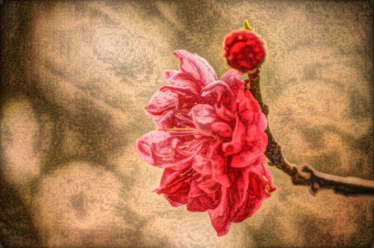kuvataiteen, öljymaalaus, nousi, kukka, terälehti, taide, sisustus, romanssi