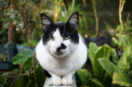 黑白, 好奇心, 家养猫, 脸, 眼睛, 凯蒂, 宠物, 国内