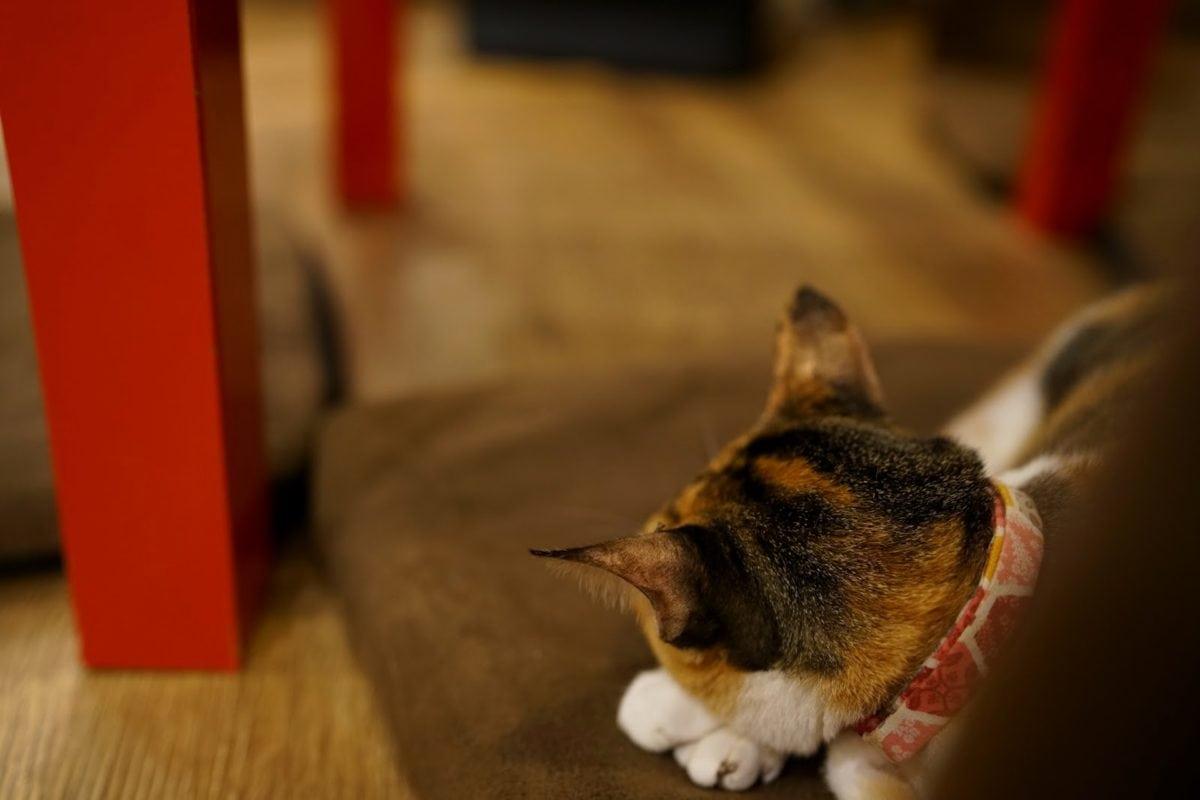 krzno, mačka, domaće, ljubimac, portret, unutarnji prostor, zamagliti, slatka