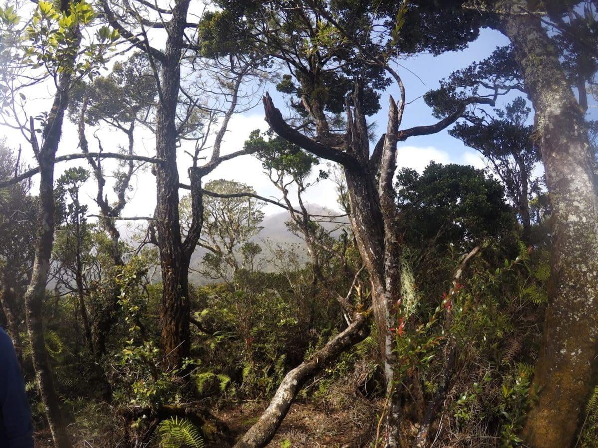 regnskog, anlegget, skog, natur, landskapet, treet, tre, regnskogen