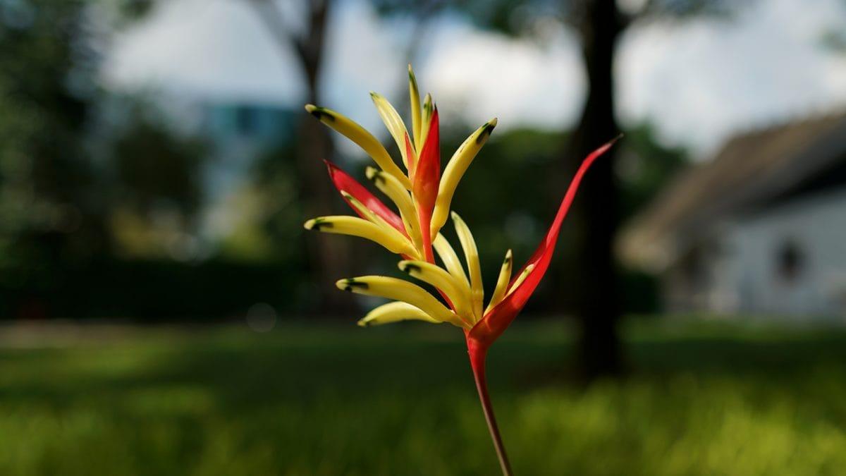 тропически, природата, цвете, храст, растителна, на открито, лято, трева