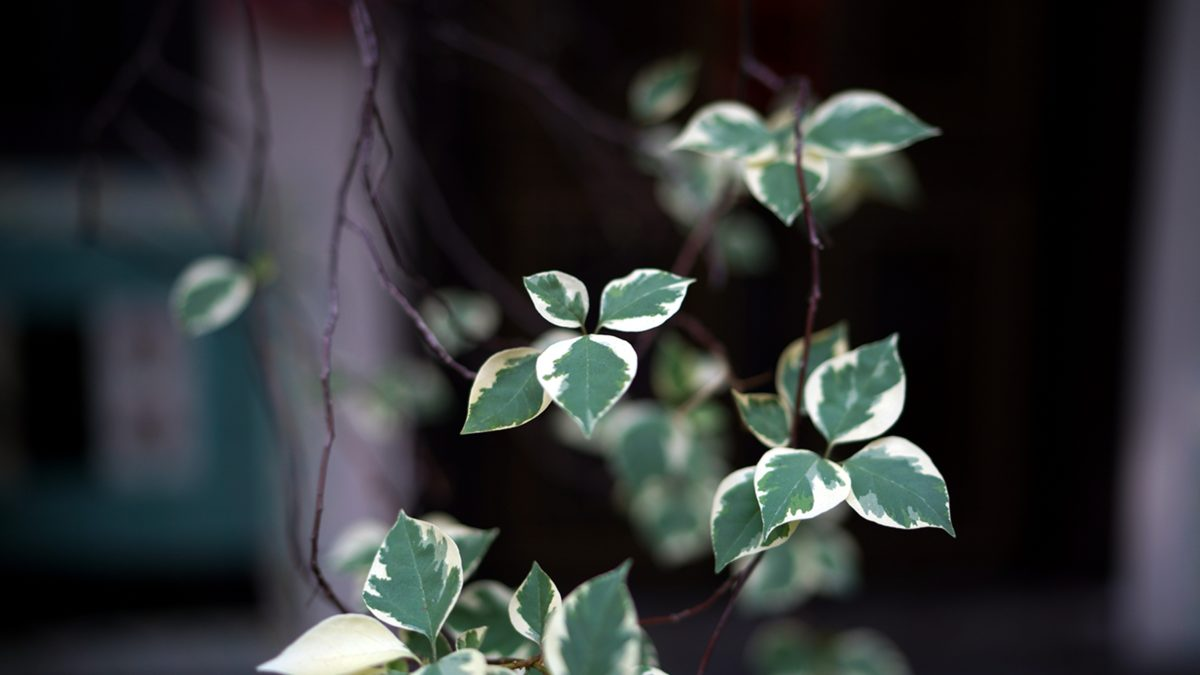 plante, feuille, herbe, flore, brouiller, jardin, lierre, nature