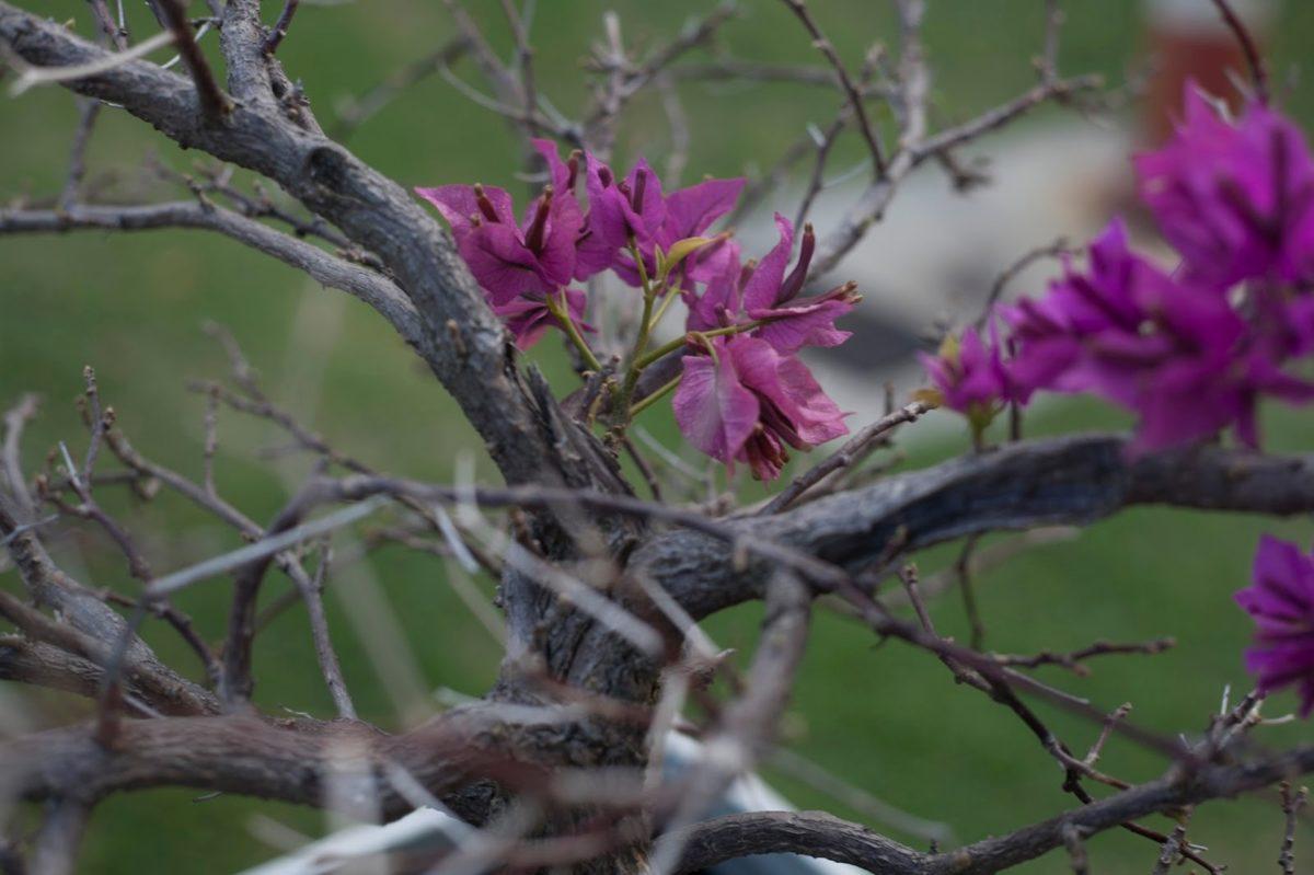 Příroda, strom, keř, závod, květ, Flora, zahrada, list