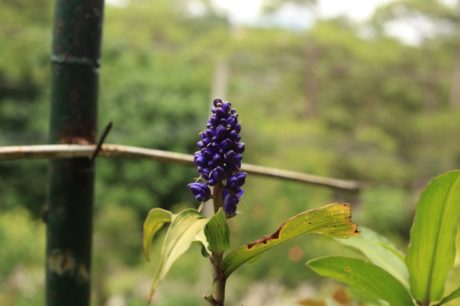 herb, plant, nature, shrub, Buddleja buddlejeae, flora, flower, leaf