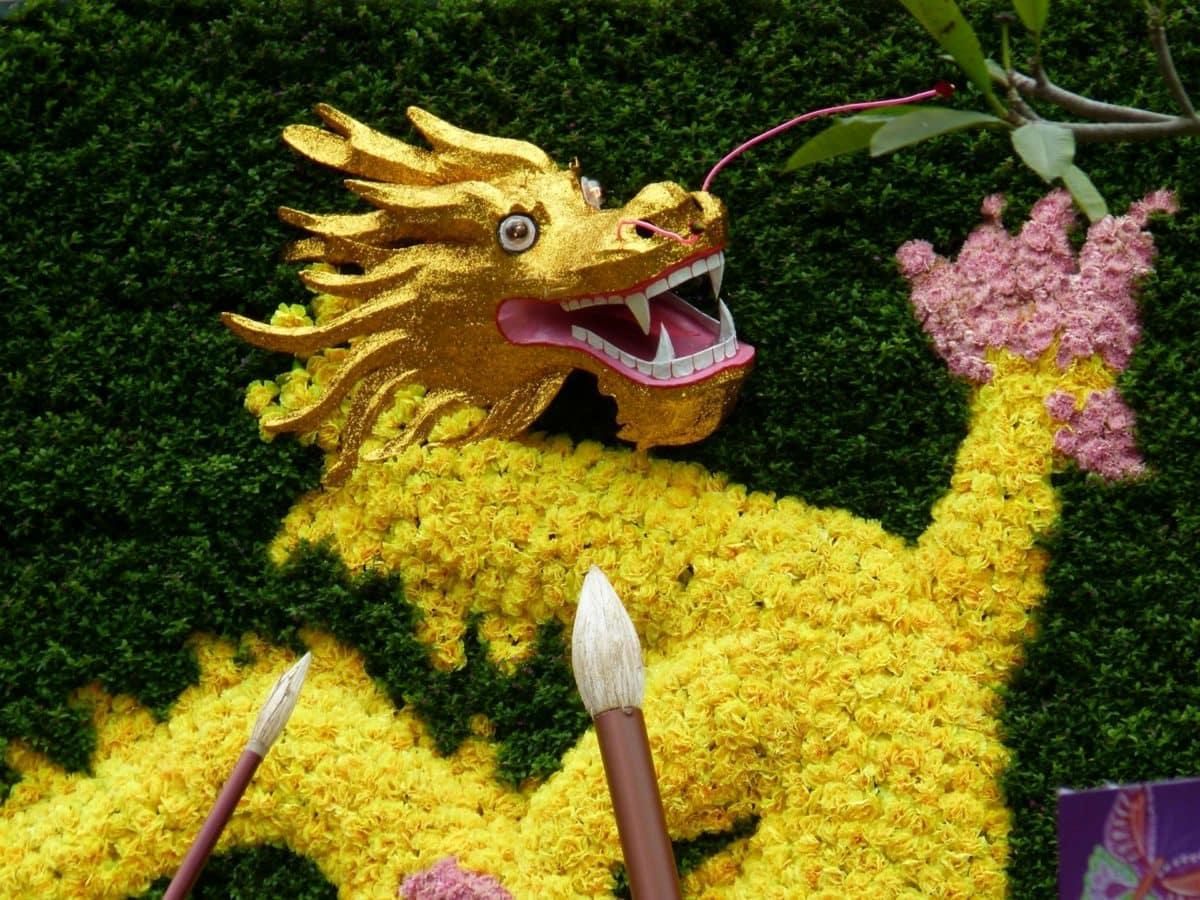Čína, drak, dračí hlavu, festival, květ, Příroda, zahrada, venku