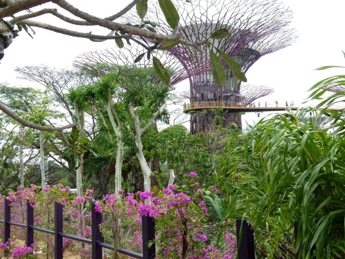stakittgjerde, treet, hage, bygge, blomst, natur, blad, Sommer