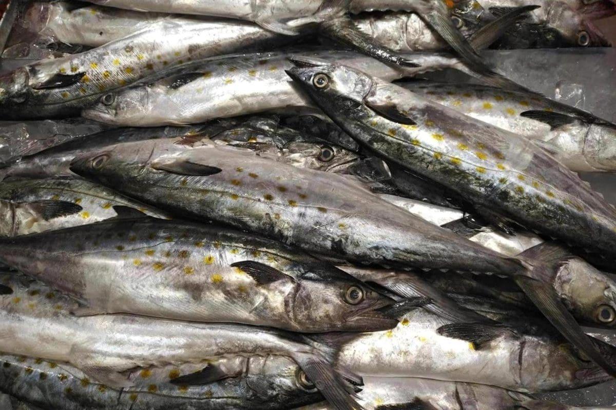 detalj, riba, vrsta riba, riba, morska riba, srdele, tržište, plodovi mora