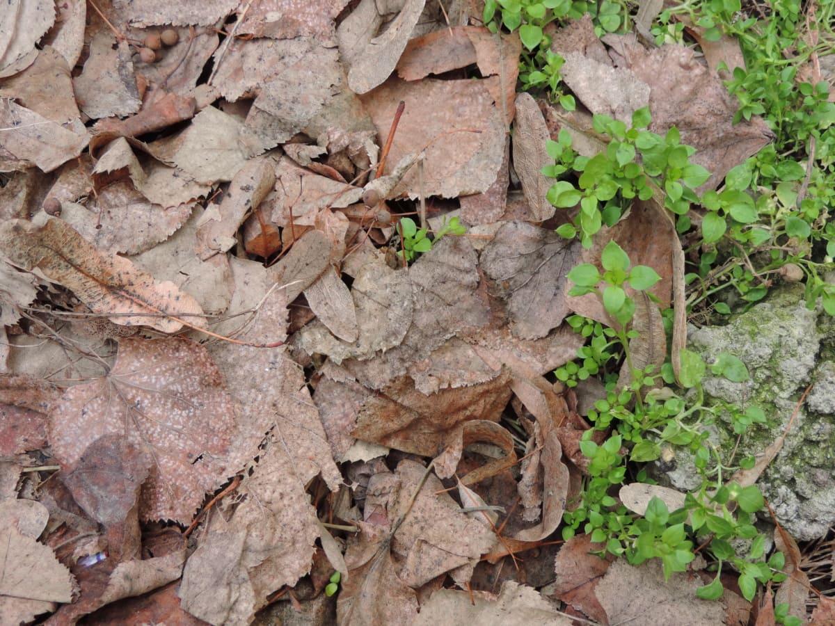 konsistens, blad, naturen, flora, miljö, marken, närbild, gamla