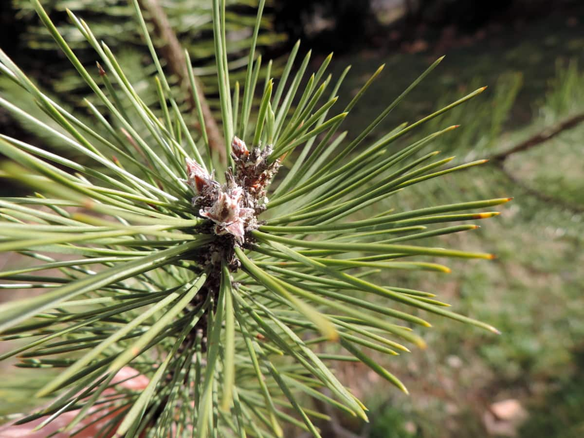 conifer, detail, green leaf, plant, tree, evergreen, nature, needle