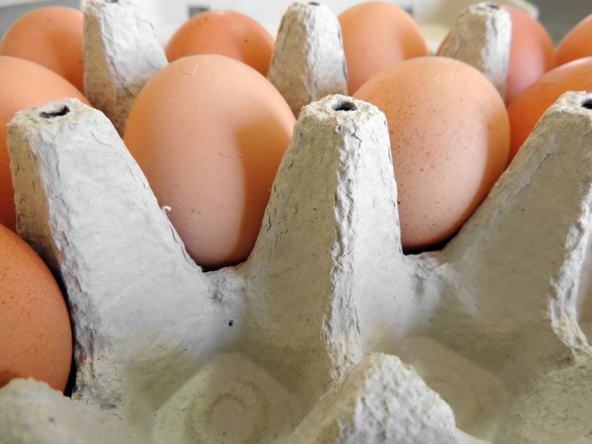 food, egg, shell, flour, baking, cooking, ingredients, breakfast