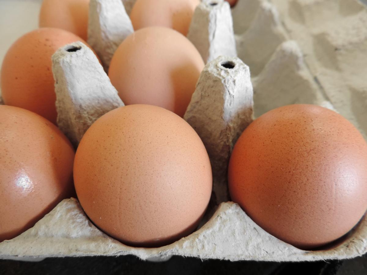 eggshell, shell, poultry, egg, food, breakfast, cholesterol, hen