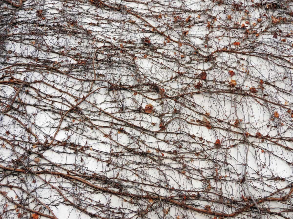秋天季节, 纹理, 分支, 树, 性质, 木材, 景观, 墙上